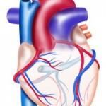 手術初心者は必読!僕の手術初体験 その2 「心臓が痛い」→検索のつもりが「臓」を忘れた。